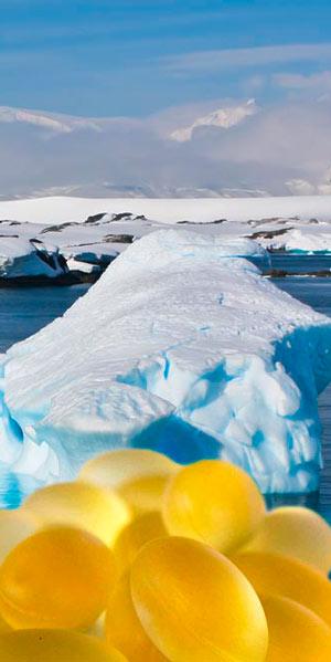 Fotomontage: Ein Arktisches Meer mit Eisbergen und im Vordergrund Krillölkapseln freigestellt.