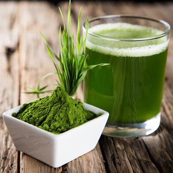 Gerstengras-Extrakt, Natur pur hier bestellen