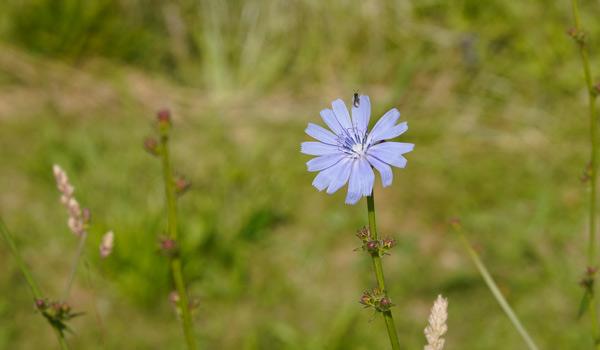 Blume_umwelt.jpg